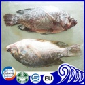 gutted scaled whole round tilapia - product's photo