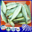 frozen farm raised yellow croaker fish - product's photo