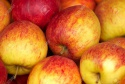 sweet delicious fresh golden apple fruits - product's photo