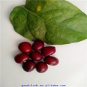 raw dark red kidney beans - product's photo