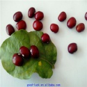 chinese high quality dark red kidney beans - product's photo