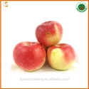 fresh red gala apple fruit - product's photo