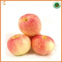 fresh red gala apple fruit for export with best price - product's photo