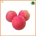 fresh red qinguan apple fruit for exporter - product's photo