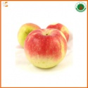 fresh red chinese gala apple fruit for sale - product's photo