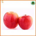 sweet organic fresh qinguan apple fruit  - product's photo