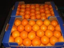 fresh naval orange - product's photo