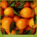 sweet fresh naval orange - product's photo