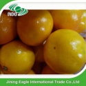 new arrival fresh sugar tangerine baby mandarin orange fruit - product's photo