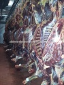 carcass of horse meat - product's photo
