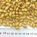 dry beans yellow eye beans supplier - product's photo