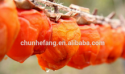 chinese dried persimmons fruit from shaanxi fuping - product's photo