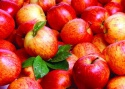 best fresh apple fruit for sale - product's photo