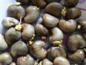 quality raw cashew nut for sale - product's photo