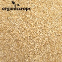 organic white quinoa grain - product's photo