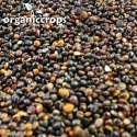 organic black quinoa grain - product's photo