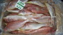 fresh frozen red sea bream fish (seafood) - product's photo