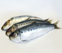 fresh frozen bulk sardine fish - product's photo