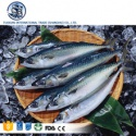 whole frozen sea mackerel fish as food - product's photo