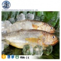 frozen seafood striped croaker - product's photo
