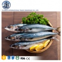 full of nutrition huge pacific black hard tail mackerel - product's photo