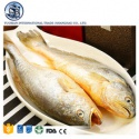 wholesale buy frozen big yellow croaker fish - product's photo