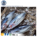 bqf frozen seafood skipjack - product's photo