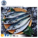 frozen atlantic black mackerel seafood  - product's photo