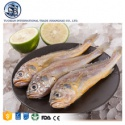 fresh frozen pacific silver croaker fish seafood - product's photo