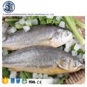 frozen pacific large yellow croaker fish farming  - product's photo