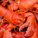 lobster - product's photo