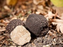 fresh black and white truffles - product's photo