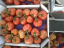 fresh tomatoes - product's photo