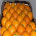 fresh sweet valencia oranges - product's photo