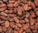 quality dried cocoa beans - product's photo