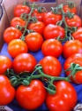 fresh vegetables wholesale - product's photo