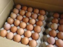 fresh chicken eggs,poultry eggs,fresh farm eggs - product's photo
