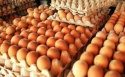 fresh eggs , white and brown farm eggs , table eggs for sale - product's photo