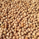 shifa chickpea - product's photo
