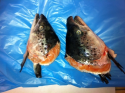 tuna head v cut - product's photo