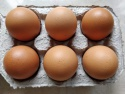 broiler egg cobb - product's photo