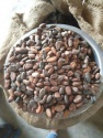 cocoa bean - product's photo