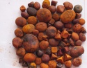 ox gallstones cattle gallstones cow gallstones - product's photo