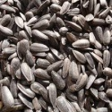 sunflower seed - product's photo