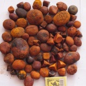 cow ox gallstones - product's photo