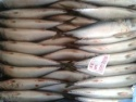 fish frozen pacific mackerel fish importers from china - product's photo