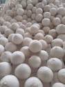 fresh young polished round cut coconut  - product's photo