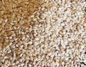 wholesale  sesame seeds  - product's photo