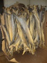 dried cod fish in pieces and cuts/ dry stock fish  - product's photo