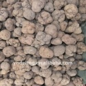 fresh truffle 3-5cm - product's photo